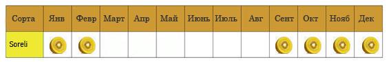 sorelli_aktinidia-ru